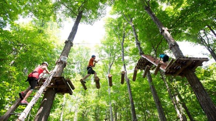 hamilton treetop trekking
